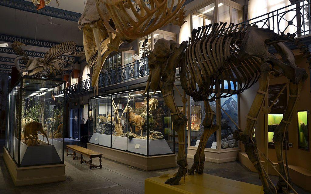 Découverte du Musée d'Histoire Naturelle de Lille